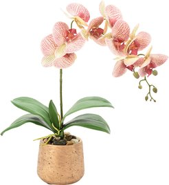 Creative Displays Orchid Over Water in Round Planter