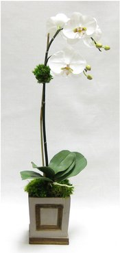 Artificial Orchid in Small Wooden Square Container
