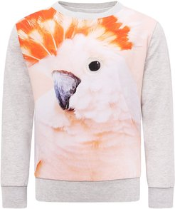 Grey Sweatshirt With Colorful Parrot For Girl