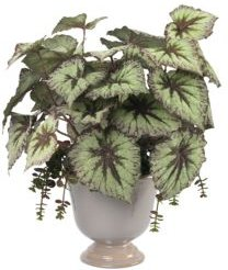Begonia Plant with Succulents Faux Greenery