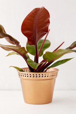 """Punched Metal 6"""" Planter - Metallic at Urban Outfitters"""