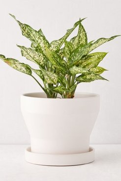 """Malakai 10"""" Planter - Beige at Urban Outfitters"""