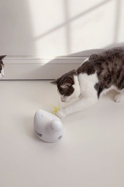 Peek-A-Bird™ Electronic Cat Toy - White at Urban Outfitters