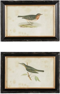 Willow Row Large Vintage Style Pipit And Warbler Bird Illustrations In Rectangular - Black Frames With Gold Trim - Set of 2 at N