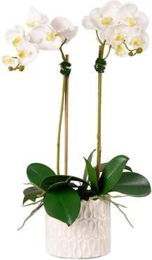 Casual Orchid Planter Decoration