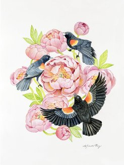 Red Winged Blackbirds & Coral Peonies Watercolor Illustration Fine Art Print
