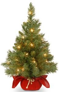 Majestic Fir Tree with Clear Lights