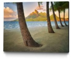"14"" x 11"" Palm Island Museum Mounted Canvas Print"