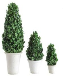 Cone Topiary in Clay Pot