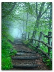 Into the Mist, Canvas Wall Art
