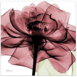 """Chianti Rose Ii Frameless Free Floating Tempered Glass Panel Graphic Wall Art, 24"""" x 24"""" x 0.2"""""""