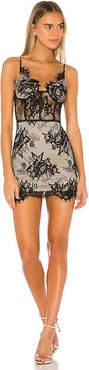 Charlize Lace Mini Dress in Black. - size XS (also in L,M)