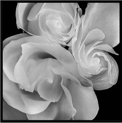 "Jonathan Bass Studio ""Rose Bloom"" Canvas Print"