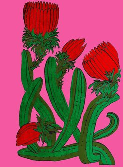 Signed Print The Cactus Large