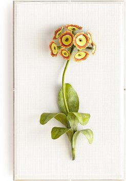 Original Painted Auricula Study
