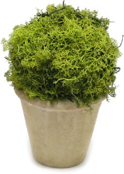 Reindeer Moss Topiary Ball Ceramic Container